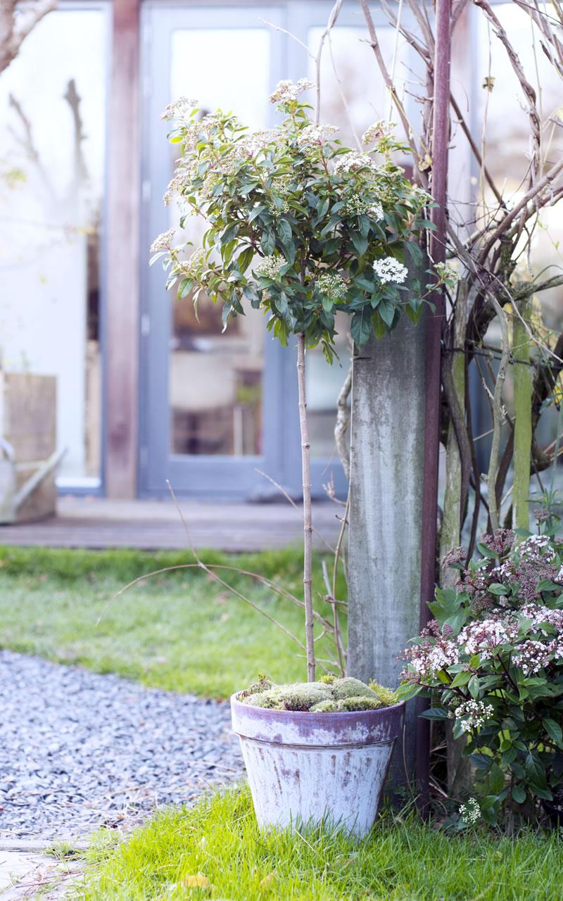 garten balkon und terrasse blumen kraft in waldbronn sch nes f r drinnen drau en. Black Bedroom Furniture Sets. Home Design Ideas